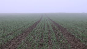 Autumn crop field and morning fog stock video footage