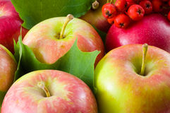 Autumn crop. Fruit Royalty Free Stock Photo
