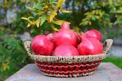 Pomegranates. Autumn & Autumn crop - pomegranate Royalty Free Stock Images