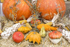 Autumn crops. Colorful display of autumn crops Stock Photo
