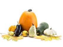 Autumn crops stock photo