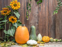 Autumn crops royalty free stock image