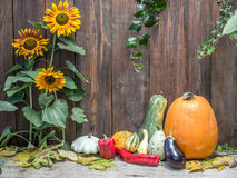 Autumn crops stock photography