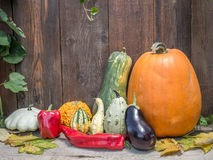 Autumn crops stock images