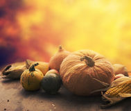 Autumn crops Royalty Free Stock Photo