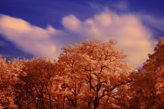 Autumn crowns. Orange crowns of trees on a colorful skyline royalty free stock images