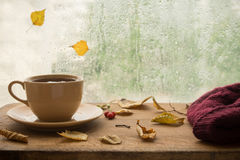 Autumn. Cup of tea. Stock Images