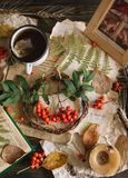Autumn cup of tea with rowanberry wooden frame. Picture of red mushrooms, leaves, vintage paper, fern stock photography
