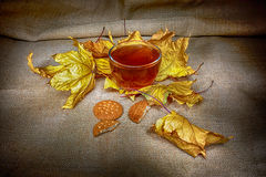 Autumn cup of warm tea. Cup of hot tea set in the autumn season stock image