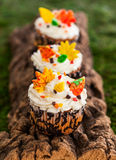 Autumn cupcake Stock Images