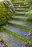Autumn Curved Concrete Steps Stock Photo