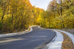 Autumn curvy road. Landscape, yellow forest view royalty free stock image