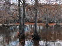 autumn cypress swamp landscape stock images