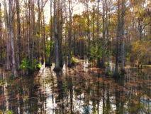 autumn cypress swamp landscape stock photo