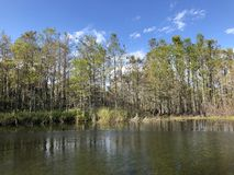 autumn cypress swamp landscape stock photos