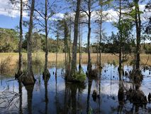 autumn cypress swamp landscape stock photos