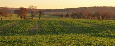 Autumn Czech landsape. The green fields and alley in the sunset Stock Images
