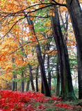 Autumn in Czech Republic Royalty Free Stock Photography