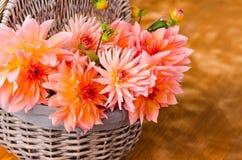 Autumn dalia Stock Photography