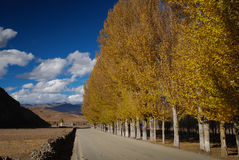 Autumn in Daocheng County. Sichuan Province, China. This road is link between daocheng city and yading nature reserve Royalty Free Stock Photo