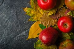 Autumn dark background or frame of fallen yellow leaves and ripe red apples. Frame for text or photo. Applicable for an Royalty Free Stock Photo