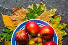 Autumn dark background or frame of fallen yellow leaves and ripe red apples. Frame for text or photo. Applicable for an Royalty Free Stock Images