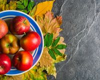 Autumn dark background or frame of fallen yellow leaves and ripe red apples. Frame for text or photo. Applicable for an Stock Images