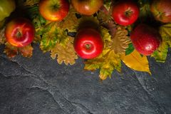 Autumn dark background or frame of fallen yellow leaves and ripe red apples. Frame for text or photo. Applicable for an Royalty Free Stock Photography