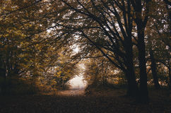 Autumn in dark forest Stock Image