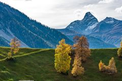 Autumn in Davos Grisons Switzerland, yellow coloured trees stock photo