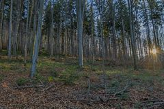 Autumn dawn in Carpathians beech forest Stock Image