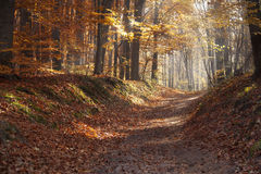 Autumn dawn in forest. Morning sun beams or rays in autumn park or forest. Autumn dawn in forest. Morning sun beams or rays in autumn forest. forest road Royalty Free Stock Images