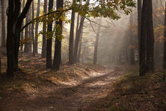 Autumn dawn in forest. Morning sun beams or rays in autumn park or forest. Autumn dawn in forest. Morning sun beams or rays in autumn forest. forest road stock image
