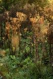 Autumn dawn landscape detail Stock Photo