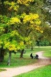 Autumn Day Royalty Free Stock Image