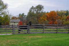 Autumn Day bij Oude Wereld Wisconsin met een zwart paard stock foto