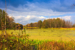 Autumn day on bog Stock Images