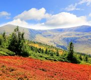 Autumn day in Carpathians Royalty Free Stock Images