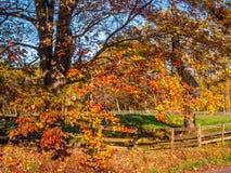 Autumn Day colorido Fotos de archivo