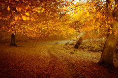 Autumn day in Dyrehaven forest near Copenhagen, Denmark Royalty Free Stock Photos