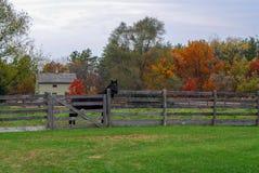 Autumn Day en el Viejo Mundo Wisconsin con un caballo negro foto de archivo