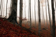Autumn day in the enchanted forest Stock Photography