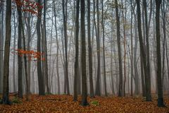 Autumn day in the enchanted forest Stock Image