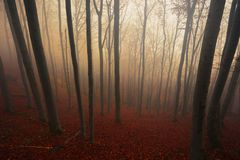 Autumn day in the enchanted forest Stock Photo