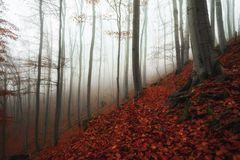 Autumn day in the enchanted forest Stock Photos