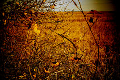 Autumn day on the field. Twigs, branches and golden leaves on an empty field in autumn Royalty Free Stock Images