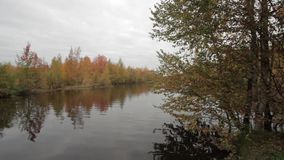 Autumn day at the forest lake stock video footage