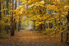 Autumn day in the forest Stock Images