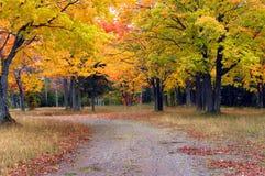 Autumn Day i Michigan royaltyfri fotografi