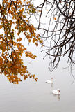 Autumn day at Lake Balaton,Hungary Royalty Free Stock Photo